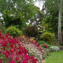 Glenbar_Red and daisy border.jpg