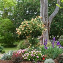 Glenbar_Perennials with tree backdrop.jpg