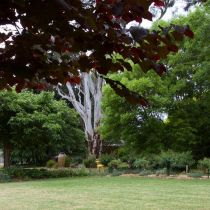 Glenbar_Eucalypt and greenery.jpg