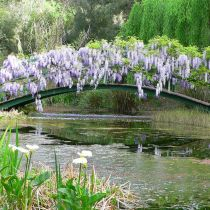 Witches_Monet bridge.jpg