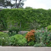 Seafarm_Climber and perennial border.jpg