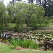 Seafarm_Lily pond and willows.jpg