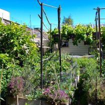 Plummery_Overview of garden.jpg