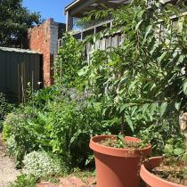 Northcote Paradise_Pots and veggies.jpg