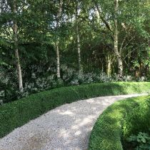 Verdicus_Birches and hedged path.jpg