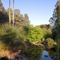 Eungella_Grass tree and pond.jpg