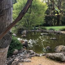 Eungella_Pond, rocks and tree.jpg