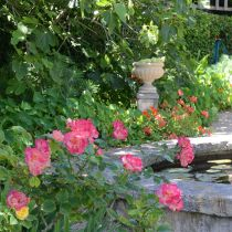 Shipway_Pond and roses.jpg
