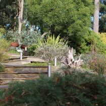 Warooka Stairs and Native Plantings