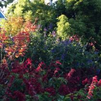 Arundel_Colour profusion.jpg