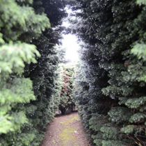 Minemoorong fir pathway