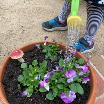 Top up with potting mix, and plant something like viola seedlings