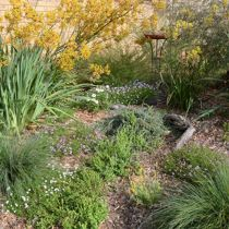 Shirley Carn's garden ground covers and log