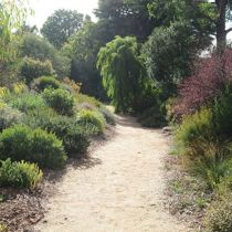 Shirley Carn's garden pathway and fringing plants
