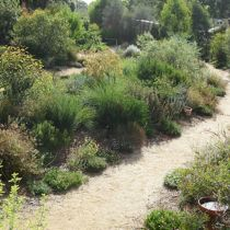 Shirley Carn's garden two sand pathways and plants