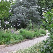 Banool Cedar and borders