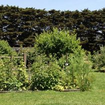 Frog Hill veggie garden and cypress hedge