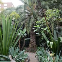Avoca Street Garden pathway and palm