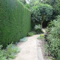 landscape hedge and pathway