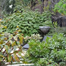Toorak Winter Garden_Aeonium path.jpg