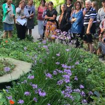 Raingarden_KS tour close-up.jpg