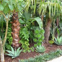 Tropical Paradise_Palms and aloes.jpg