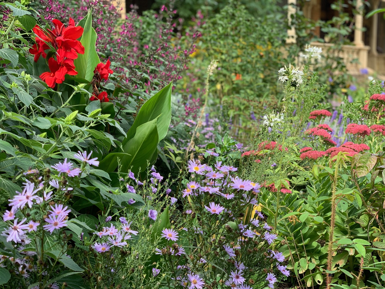 Passion for perennials competition - winner announced!